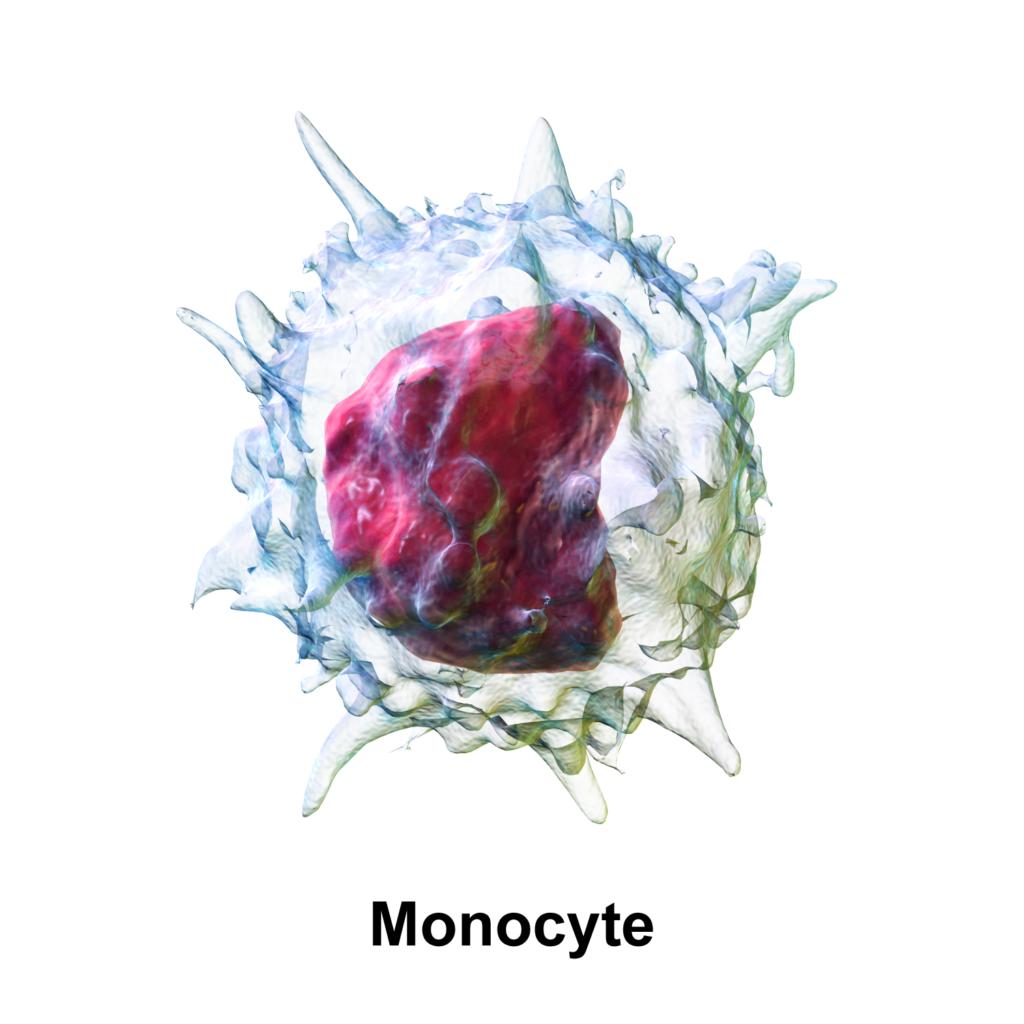 dieta per monociti alti