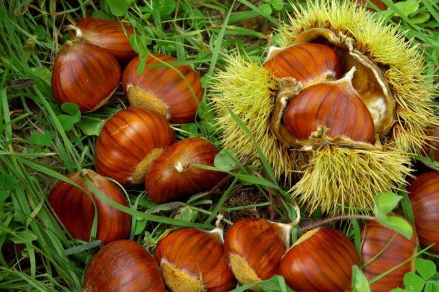 frutta secca castagne