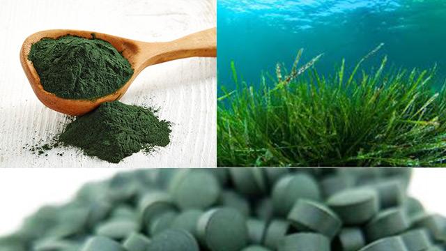 Alga spirulina: Cosa succede al nostro corpo assumendola ogni giorno