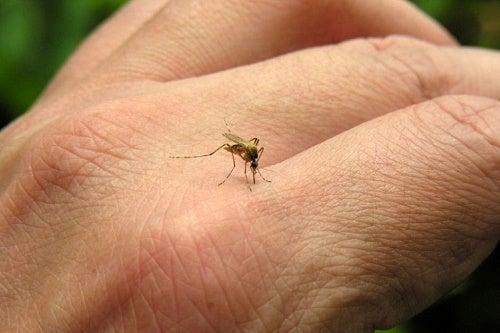 repellenti per zanzare