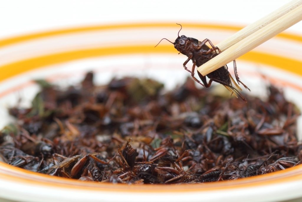 La carne del futuro potrebbe derivare dagli insetti. Ecco lo studio