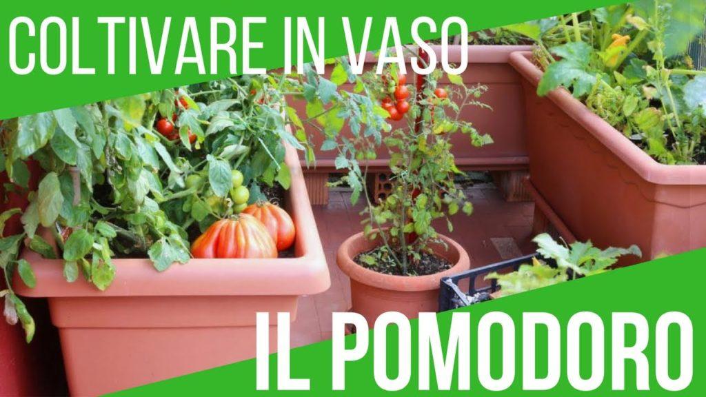 Come far crescere i pomodori in casa in 3 semplici mosse!