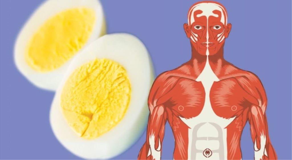 10 buoni motivi per cui mangiare uova tutti i giorni fa bene alla salute