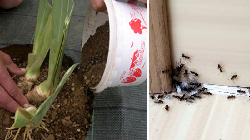 Formiche, come tenerle lontane da casa in modo naturale ed economico!