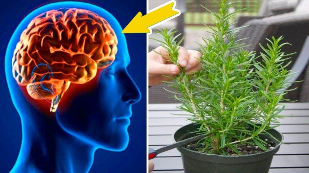 11 piante che aiutano il cervello a lavorare meglio e cosa fare