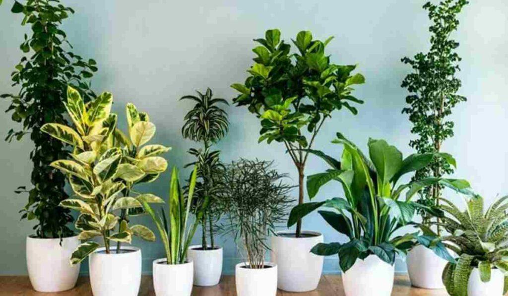 11 piante che migliorano l'aria della nostra casa e la purificano